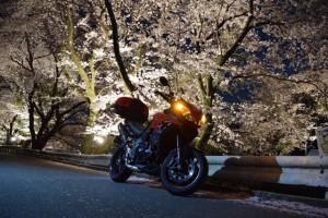 桜タイガー